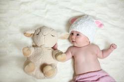 צילום תינוקות ליד כבשה