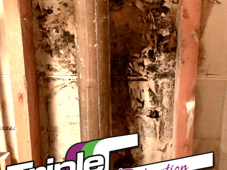 Recognizing the myths and symptoms of mold exposure in contaminated properties