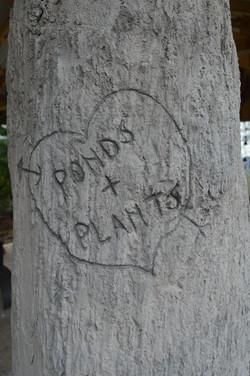 concrete tree