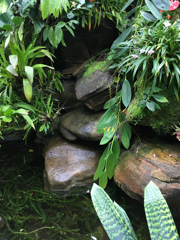 Atlanta Botanical Garden