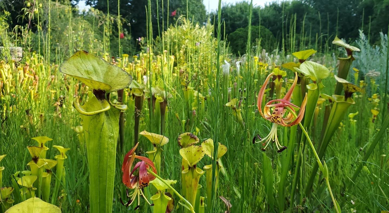 Bog Garden