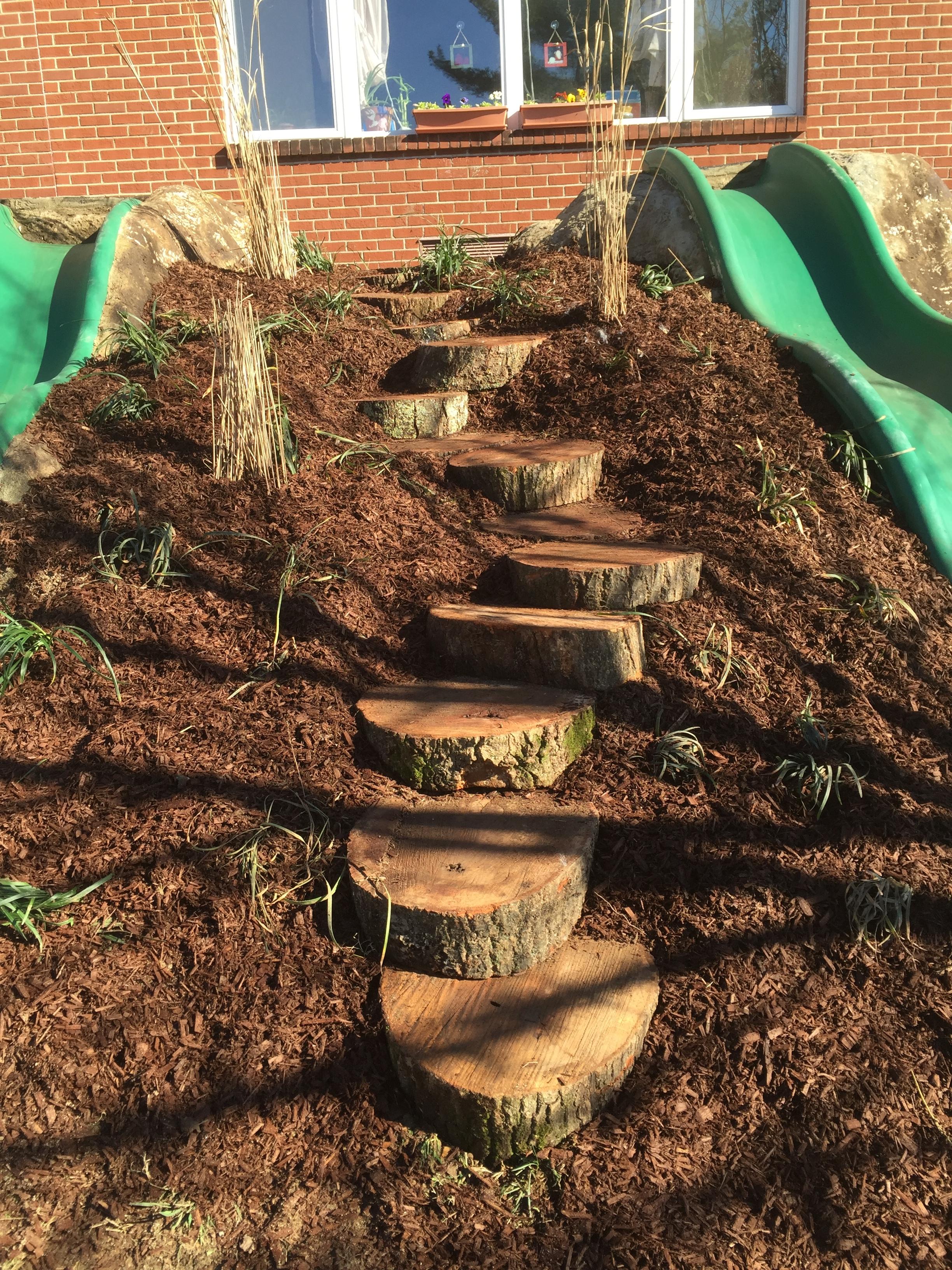 Tree Cookie Path