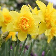 Yellow_Cheerfulness.jpeg