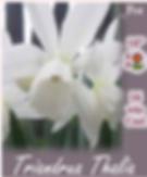 Screen Shot 2020-06-08 at 5.11.06 PM.png