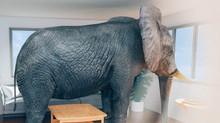 Anxiety Elephants, Part 1