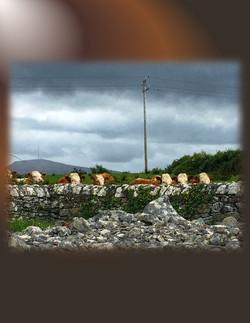 EnergyWork-Ireland