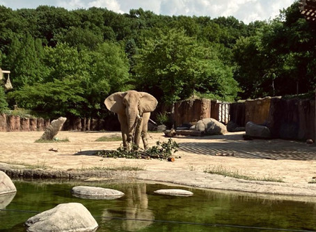 Happy reviews from our friends at the zoo