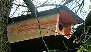 nestkast Steenuil vogelwerkgroep noordwest-achterhoek