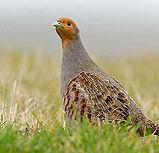 vogelwerkgroep noordwest-achterhoek