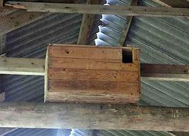 kerkuil nestkast vogelwerkgroep noordwest-achterhoek