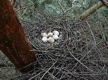 Sperwer nest.
