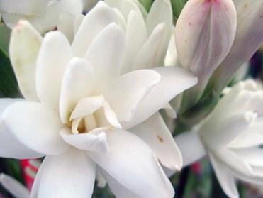 本来の輝きを放つ「花の宝石箱♦️Jewel」