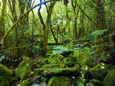 深い森のなかに誘われるような香り♪【Shangri-La】ご感想