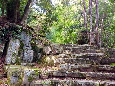 自然界でのアロマテラピー☆森林浴