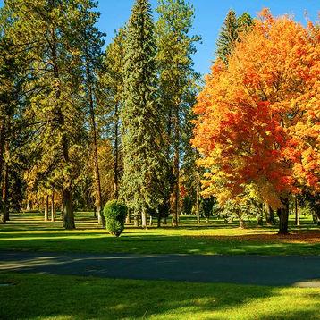 Mature Trees and Fall Foliage at Fairmount