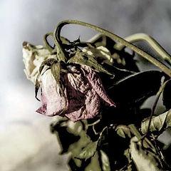 Unsightly-Flowers-1.jpg