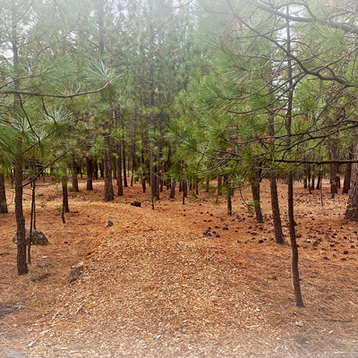 Located in naturally beautiful pine shrouded grounds at Riverside