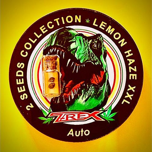 LEMON HAZE XXL Auto - semi da collezione