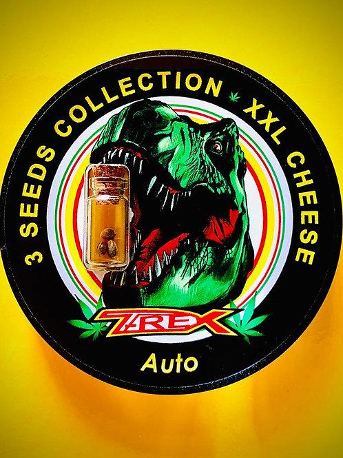 XXL CHEESE Auto - confezione da 3 semi da collezione