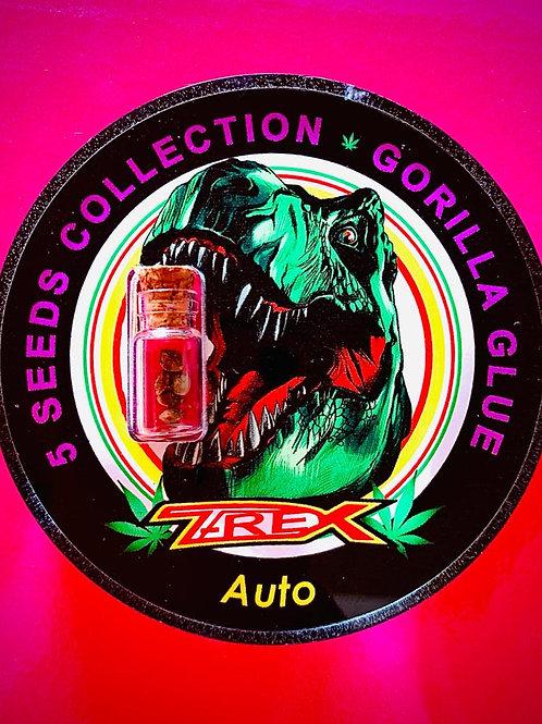 GORILLA GLUE Auto - confezione da 5 semi da collezione