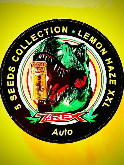 LEMON HAZE XXL Auto - confezione da 5 semi da collezione