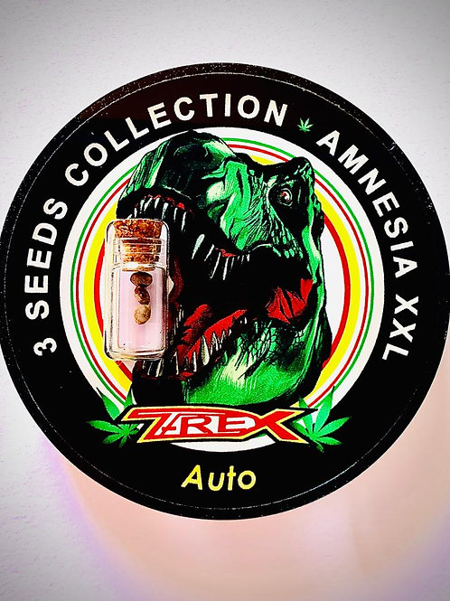 AMNESIA XXL Auto - confezione da 3 semi da collezione