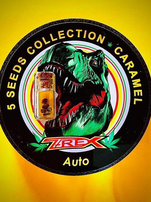 CARAMEL Auto - confezione da 5 semi da collezione