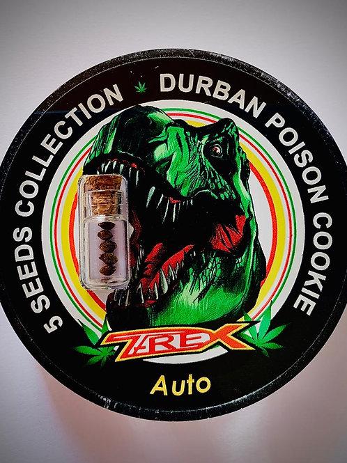 DURBAN POISON COOKIE Auto - confezione da 5 semi da collezione