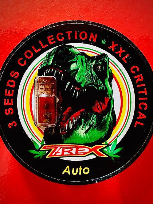 XXL CRITICAL Auto - confezione da 3 semi da collezione
