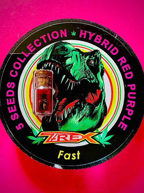 HYBRID RED PURPLE Fast - confezione da 5 semi da collezione