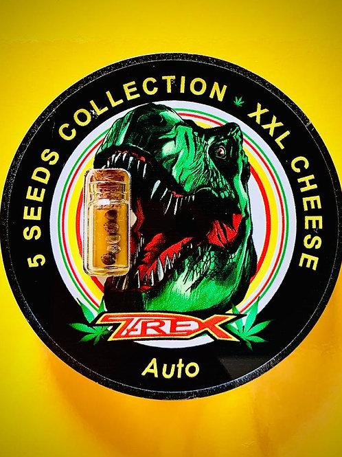 XXL CHEESE Auto - confezione da 5 semi da collezione