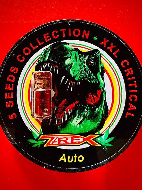XXL CRITICAL Auto - confezione da 5 semi da collezione