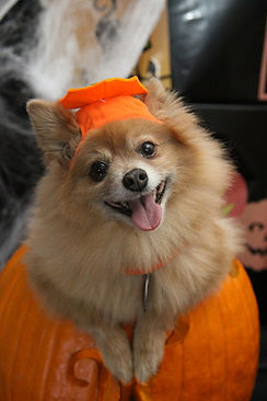 Halloween Pets.jpg