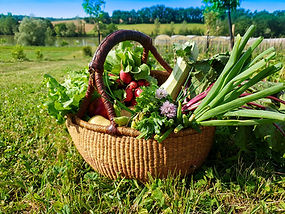 Panier-legumes-fruits-bio_jardins-cocagn