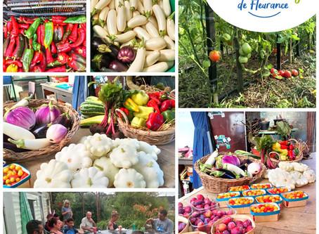Coulis, ratatouille... Pensez aux conserves de légumes et fruits bio pour l'hiver