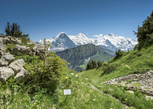 schynige-platte-alpengarten-sommer-04
