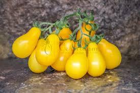 Yellow Pear Cherry Tomato