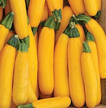 Zucchini, Yellow