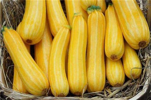 Zucchini,Yellow Stripe
