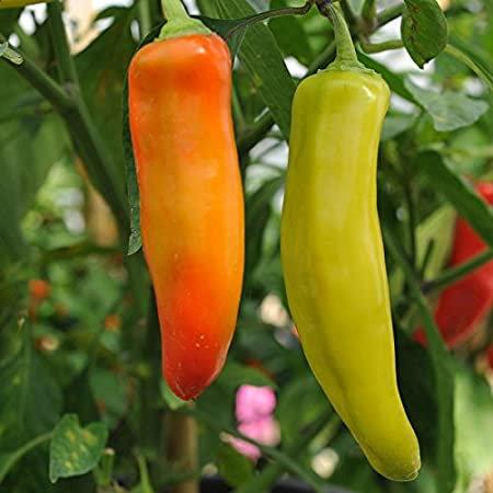 Pepper, Hungarian Hot Wax