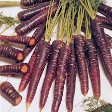 Carrot, Purple