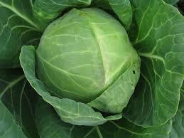 Tiara Cabbage