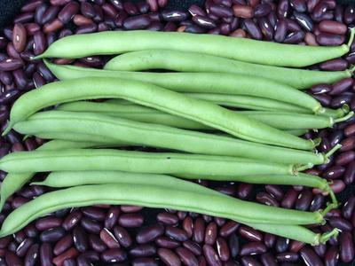 Bean, Green