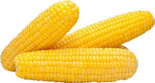 Corn, Yellow Supersweet, 6 Cobs