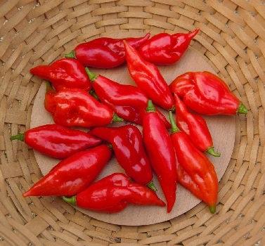 Pepper, Hot Paper Lantern