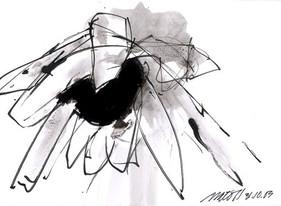 Sunflower Studies 2003