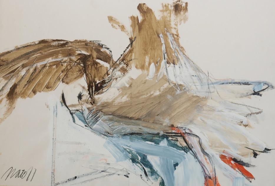 Scottish Seagull