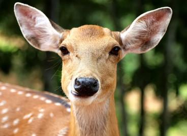 When in Doubt, Hit the Deer.