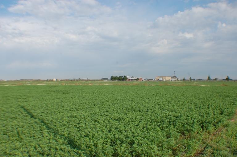 Beckett Farm6