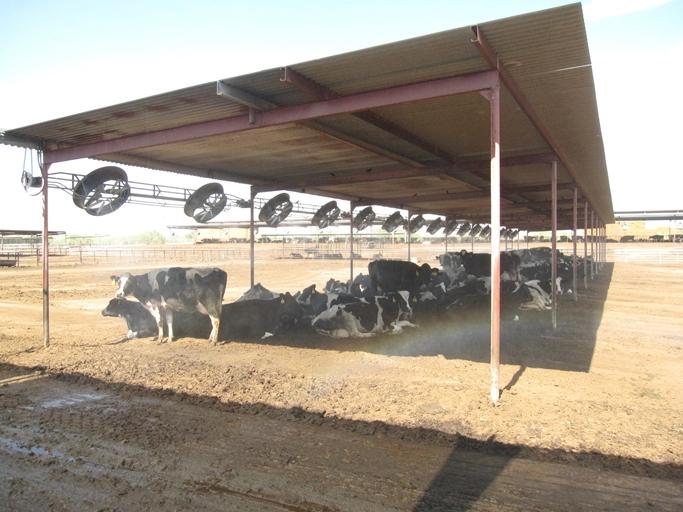 Buckeye Dairy6